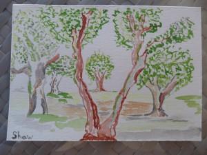 Trees in Cimiez, Nice